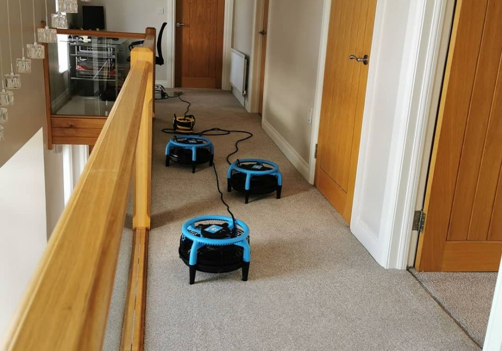 Carpet cleaning in Downpatrick